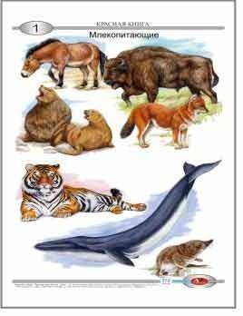 Комплект таблиц животные и растения